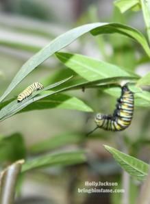 Future Monarch Butterflies